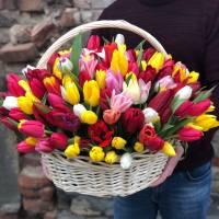 Корзина 79 разноцветных тюльпанов R290